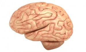 hjerne_web
