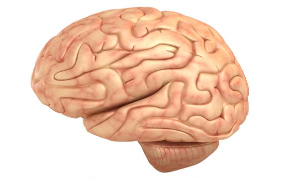 ubehandlet lavt stofskifte ændrer hjernen.